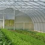 umi-nami-farms